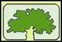 Baumpflege Bechstein